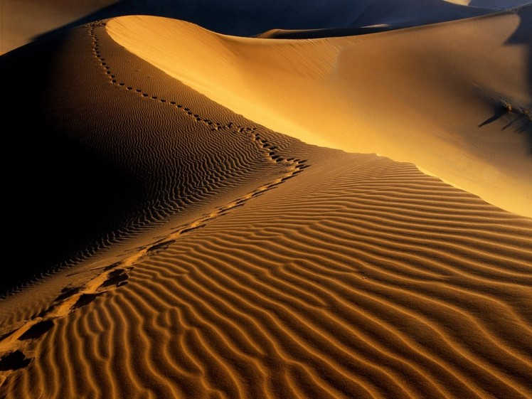Desierto de Namibia, Äfrica.