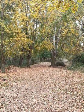 Árboles y hojas, por César Bacale