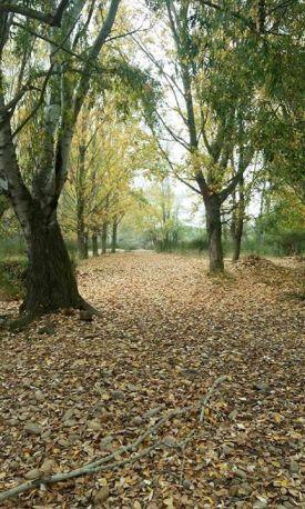 Bosque, por Zoe Bacale Malo