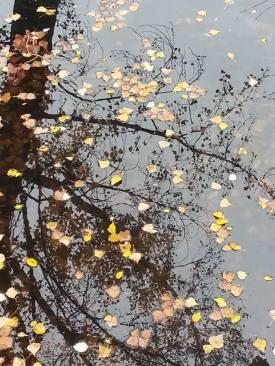 Hojas en el agua, por César Bacale